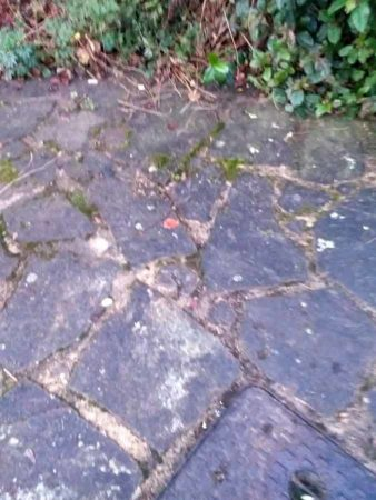 Tree Roots Damaging Paving